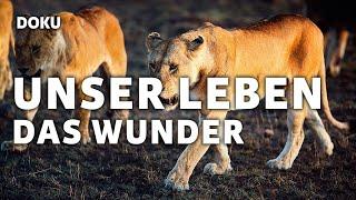 Unser Leben - Das Wunder (Dokumentation, deutsch, HD, Natur, Tierwelt, Safari, Wasserwelt)