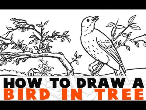 How to draw a bird on a tree branch youtube
