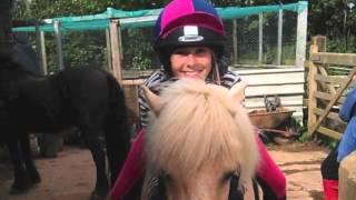 horses xxx