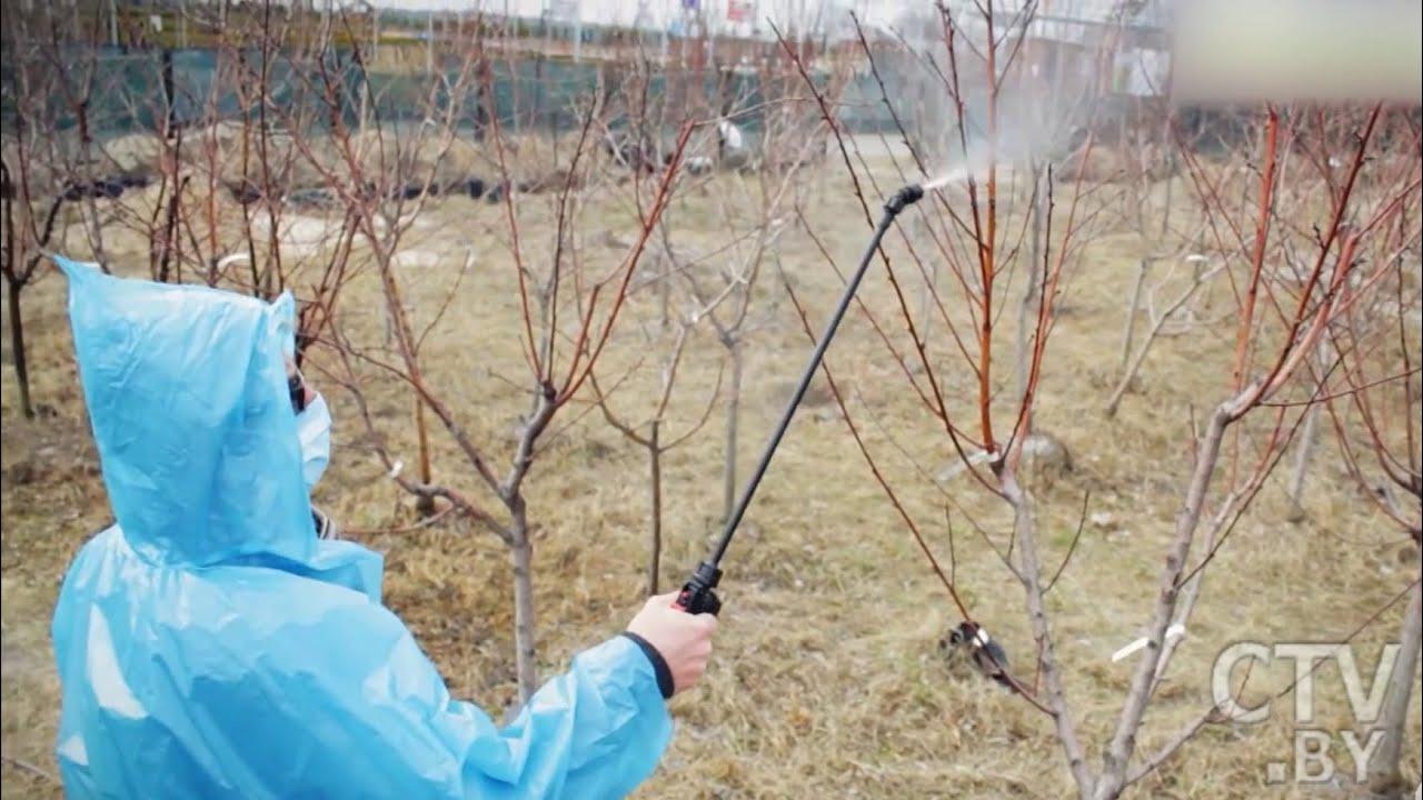 Обработка сада весной: яблони и груши. Лучшая защита от болезней и вредителей! Сад и огород - 2020