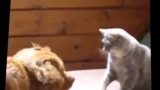 Смешные кошки . Приколы с кошками. Кошки -боксеры