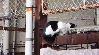 落ちそうな野良猫 Cat that seems to fall
