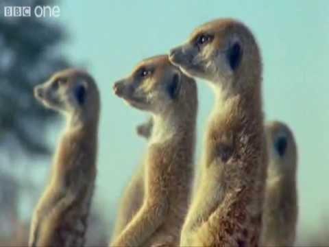 Italian Subtitled Funny Talking Animals (Animali Parlanti Divertenti con Sottotitoli in Italiano)