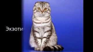 Самые красивые кошки топ 10
