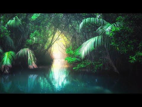 6 Hours of Relaxing Sleep Music: Soothing Harp Music, Fall Asleep Fast, Sleeping Music ★80