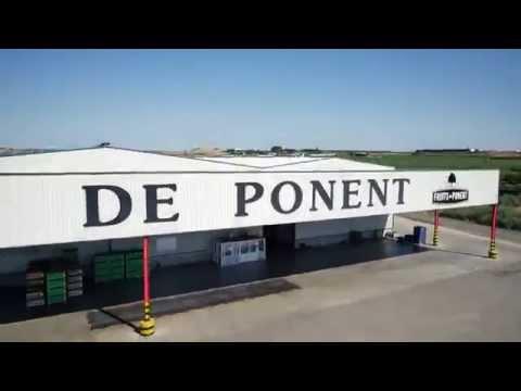Fruits de Ponent, una compañía líder de la UE en fruta de hueso