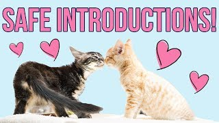 safely-introducing-kittens-from-different-litters
