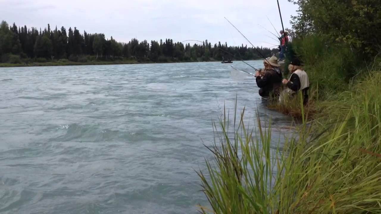 Todd bennett and another kenai sockeye 2015 youtube for Kenai river fish counts