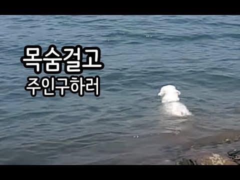 강아지 남겨두고 물로 들어가면