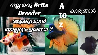 How to care Betta fish in malayalam