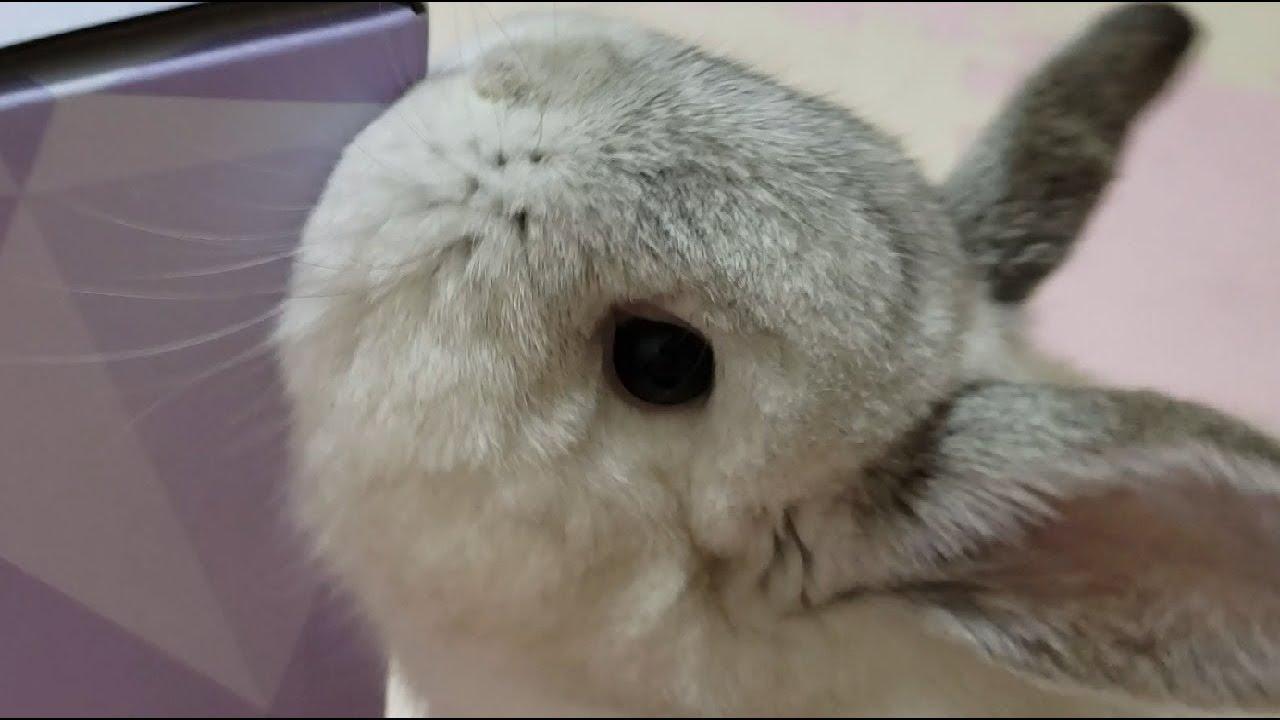 박스로 노는 롭이어 토끼 feat 드라이아이스를 처음 본 부엉이