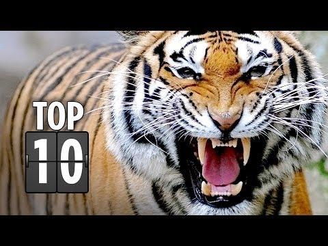 Top Ten Horrific Animal Attacks in Movies (2013) HD