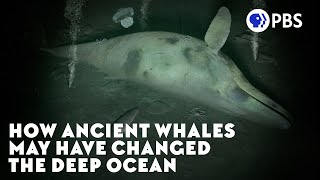 How Ancient Whales May Have Changed the Deep Ocean