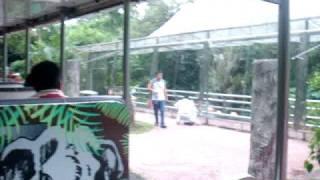 Melawat Zoo Taiping Perak