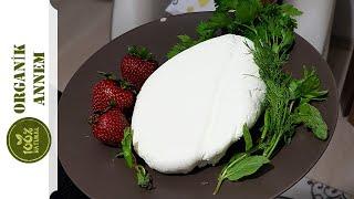 Organik Annemden Probiyotik Süzme Yoğurt (Labne Peyniri) Tarifi