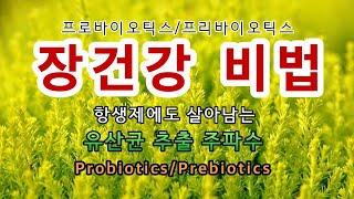 🥦과민성대장증후군ㅣ헬리코박터 억제ㅣ프로바이오틱스ㅣ프리바이오틱스ㅣ락토바실러스 아시도필루스ㅣ비피도박테리움 비피덤, 락티스, 롱검ㅣ항상제에도 살아남는 유산균