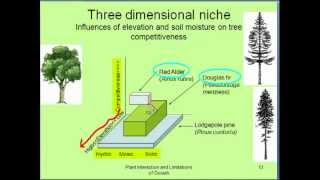 Tree Interactions and Growth Limitations - Part A thumbnail