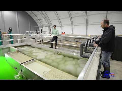 Аудит рыбной фермы УЗВ на 300 тонн форели: проверьте нет ли у вас данных проблем на ферме?!