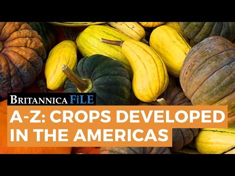 A-Z: Food Crops Developed in the Americas
