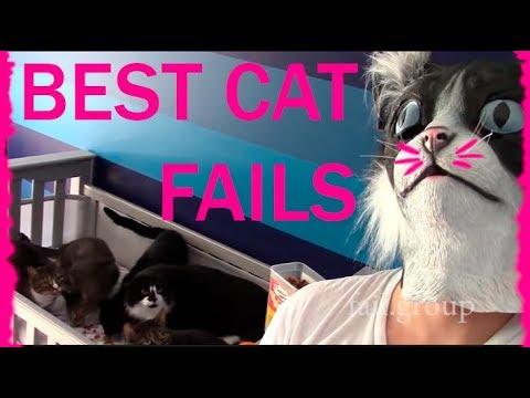Best Cat Fails: #2 | FAIL.GROUP