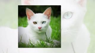 ТОП10  Самые дорогие кошки в мире - #ЛучшеенаЮТУБе