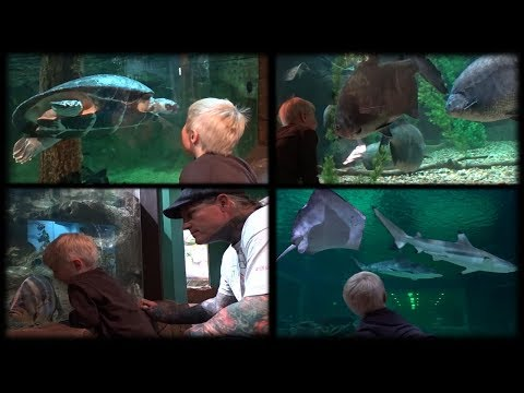 Cute Toddler Aquarium Adventure! Fun Kids Fish, Sharks, and Marine Animals Videos For Children