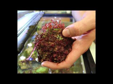 Why Study Red Algae