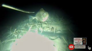 spear fishing at night part 12