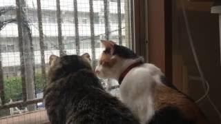 窓辺にたたずむ2匹のニャンコ、見事なシンクロ披露