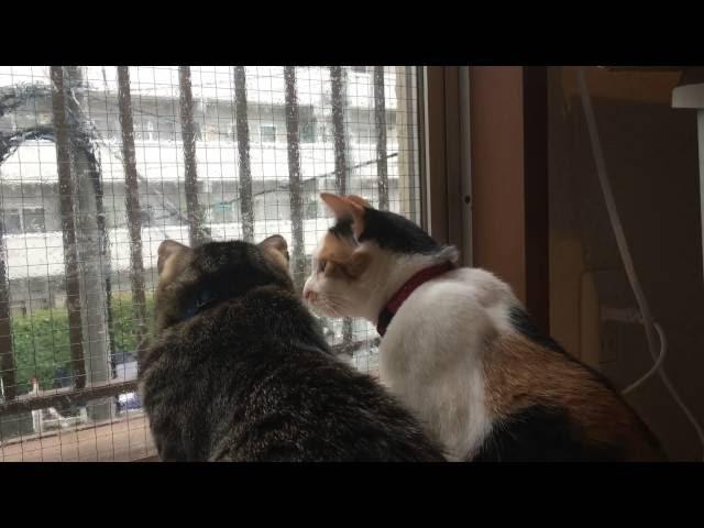 シンクロな猫。(synchronized cat.)