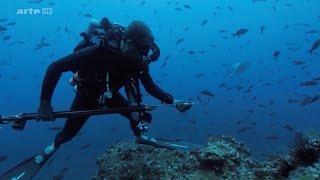 Cocos Island: Paradies für Haie?! (HD DOKU 2016)