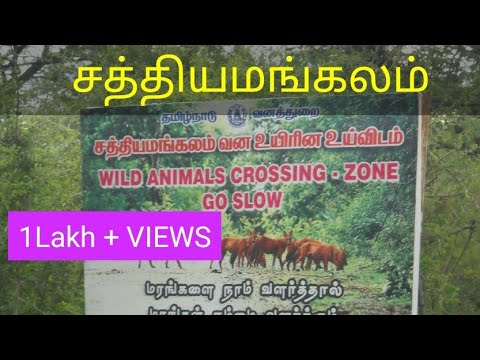 Sathyamangalam - Bannari Forest view
