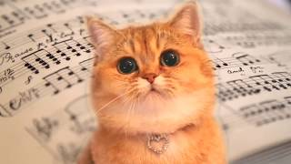 Cats Sing Beethoven - Fur Elise | + More Classical Music for kids - Cats Parody