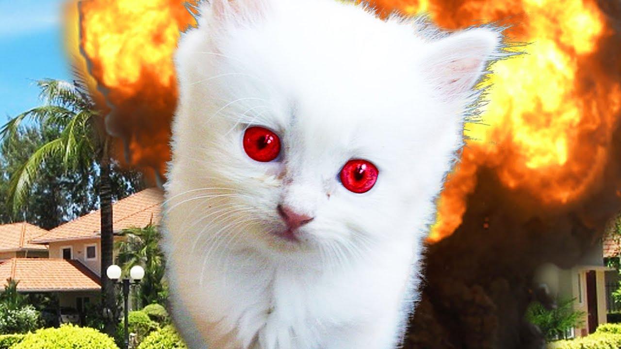 convert human years to cat years