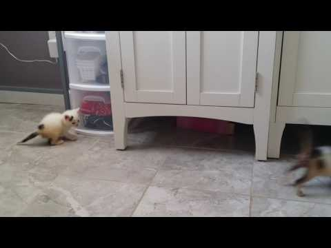 Kittens Playing Hide and Seek (2min)