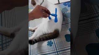 動力は猫?猫にくっつけると起動する「ネコ駆動式ファン」