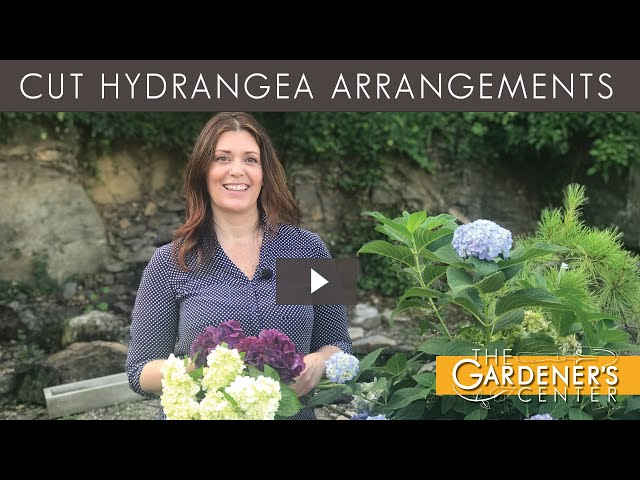 7/30/2020 Cut Hydrangea Arrangements  with Jaime