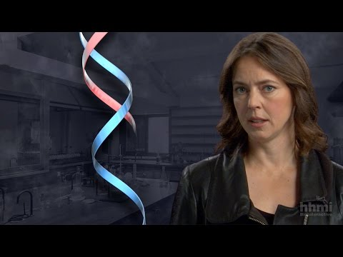 The DNA Double Helix Discovery — HHMI BioInteractive Video