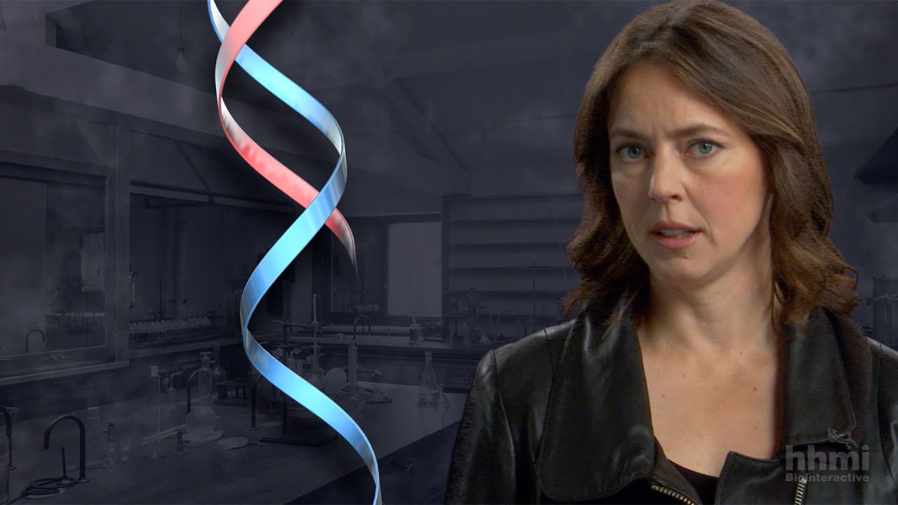 The DNA Double Helix Discovery — HHMI BioInteractive Video - YouTube