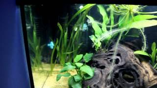 60 Litre Amazon Style Aquarium Closeup