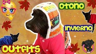 Haul OUTFITS ROPA para mi PERRO CACHORRO / Vamos de Compras! Funnydogs Lana