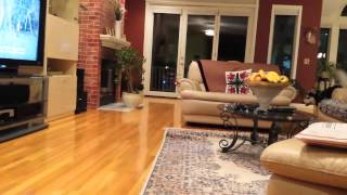 Funny Siberian Husky Puppy Scared By A Flying Helicopter