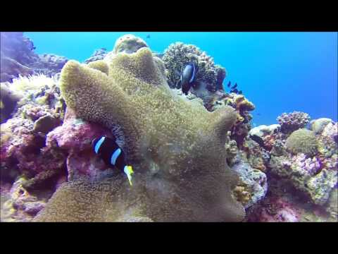 Balicasag Island, Black Forest - another Top dive in the Philippines