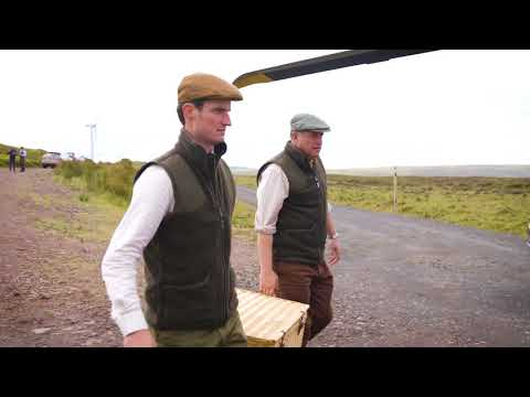 Glorious Twelfth grouse race