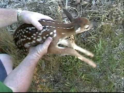 Noisy Baby deer.mp4