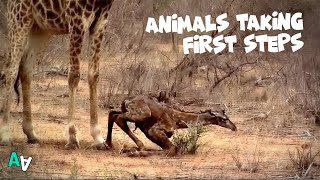 Animals Taking their First Steps Compilation | Wobbly Legs 😂
