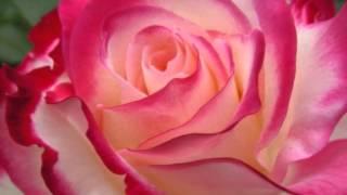 Christa Ludwig: Frauenliebe und Leben by Schumann