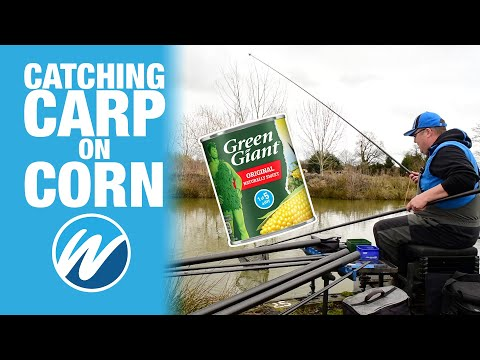 Catching Carp On Sweet Corn | Jamie Hughes | Heronbrook Fisheries
