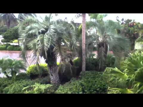Saddlebrook resort Tampa room tour