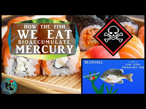 Bioaccumulation Of Methylmercury Into Fishes And Humans   Koaw Nature
